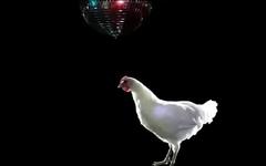Hot Chick Dancing